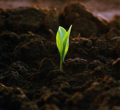 растительный грунт для роста растений Гатчина